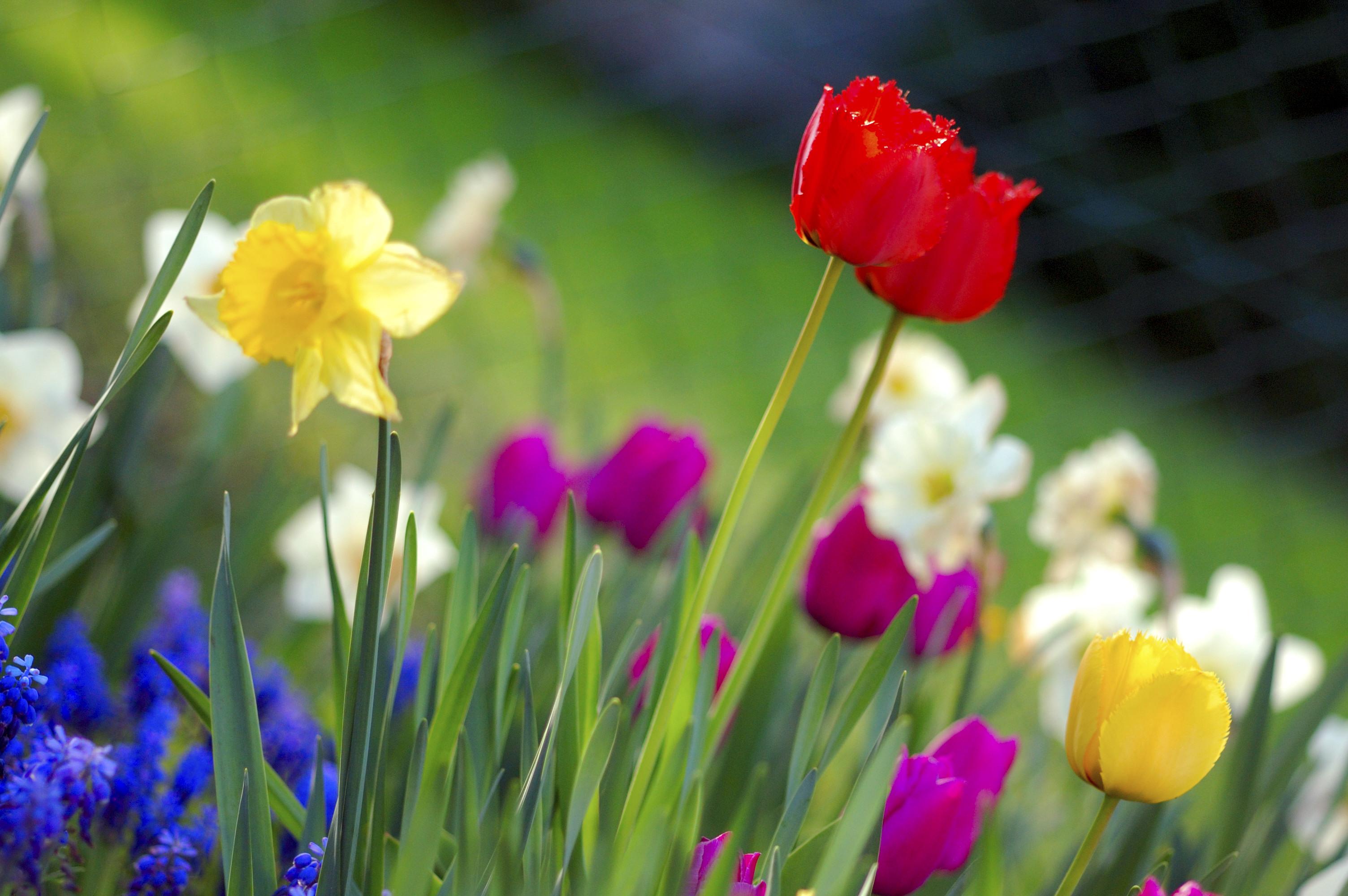 Colorful_spring_garden.jpg