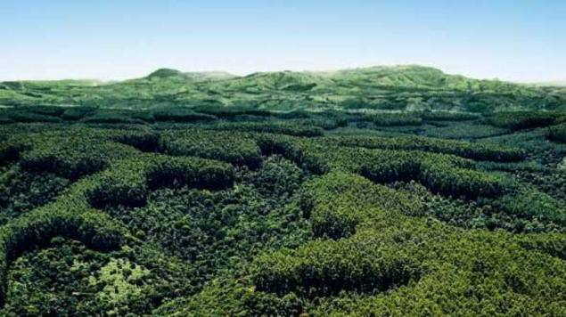 size_810_16_9_floresta-plantada.jpg