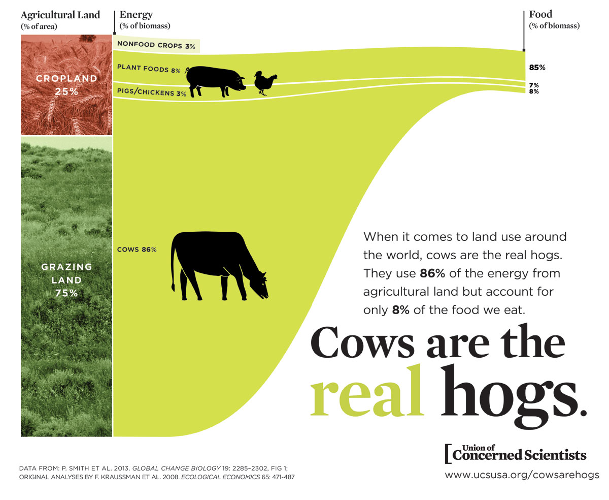 Cows-are-hogs-infographic.jpg