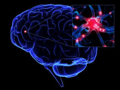neurons51.jpg